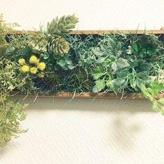 100均フェイクグリーンでどこまで出来る?アレンジ次第で無限の可能性♡ - Yahoo! BEAUTY Daiso, Plaster Walls, Green Flowers, Three Dimensional, House Plants, Flower Arrangements, Diy And Crafts, Succulents, Herbs