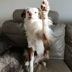 100 Followers! Paws up for that!...