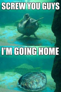 15 Hilarious Turtle Memes - World's largest collection of cat memes and other animals Cute Animal Memes, Funny Animal Quotes, Animal Jokes, Cute Funny Animals, Funny Animal Pictures, Funny Cute, The Funny, Funny Images, Funniest Pictures