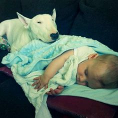 12 Reasons Why Bull Terriers Are The Most Dangerous Pets. The Last One Is Horrible.