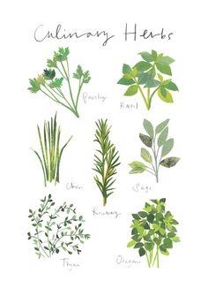 Clover Robin Herbs Illustration, Graphic Illustration, Kitchen Artwork, Kitchen Decor, Painted Paper, Greenery, Mixed Media, Giclee Print, Edible Garden