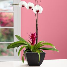 Exotic Orchid Garden and other flowers & plants at ProPlants.com