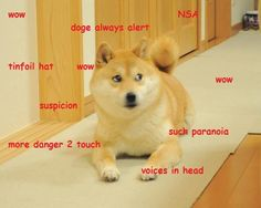 The best of the Doge meme (This one is me)