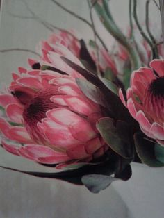 Distinctive Gifts Mean Long Lasting Recollections Proteas