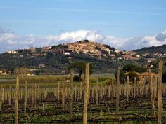 typical tuscany's landscape
