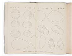 おお森もり介かい墟きょ編へん   モースによる大森貝塚発掘調査報告書は、東京大学から明治12年に「Shell mounds Omori」として出版され、同年中に日本語版も『大森介墟編』として出版されました。この報告書は、日本初の発掘報告書であり、大学による学術発表論文となりました。