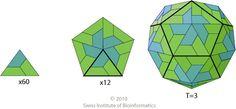ViralZone: T=3 icosahedral capsid protein