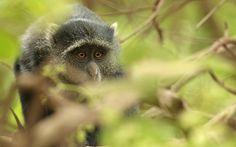 A look in tanzania