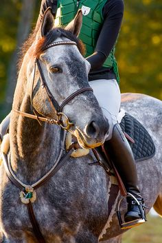 this horse is seriously gorgeous