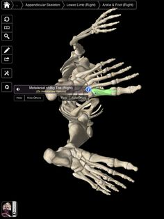Essential Skeleton - An Excellent iPad App for Students