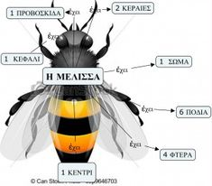 H μέλισσα έχει τόσα Bugs And Insects, Spring Activities, Spring Crafts, School Projects, Kids And Parenting, How To Plan, Animals, Greek, Education