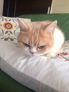 岡田モフリシャスと猫の小雪(@moflicious)さん | Twitterの画像/動画