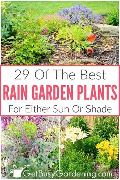 Choosing the best plants for a rain garden can be hard. Learn what to look for, and get tons of options for sun or shade on this rain garden plants list. Sun Plants, Cool Plants, Tropical Plants, Garden Plants, Rain Garden, Summer Garden, Water Garden, Full Sun Flowers, Landscape Solutions