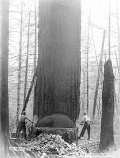 Logging the old fashioned way in Corvallis, Oregon. Circa 1910s.