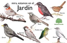 jardin - Búsqueda de Twitter John Muir, Pet Birds, Animals And Pets, Illustration, Prints, Nature, Image, Feathers, Art