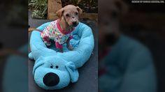 Abused puppy makes remarkable recovery