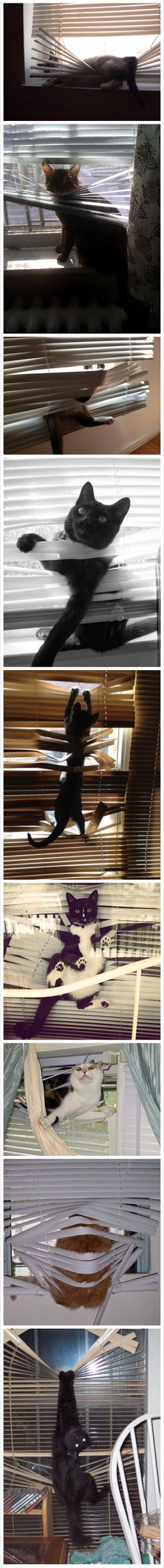 Cats and blinds dont mix