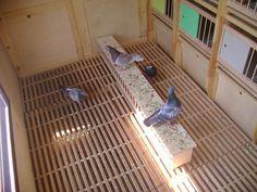 Pigeon Loft Design, Racing Pigeons, Lofts, Birds, Construction, Chicken, Garden, Animals, Pigeon Loft
