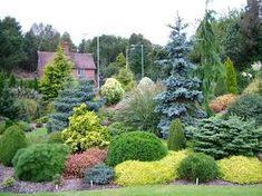 Conifers garden - Foxhollow in early October Privacy Landscaping, Hillside Landscaping, Front Yard Landscaping, Evergreen Landscape, Evergreen Garden, Garden Shrubs, Lawn And Garden, Woodland Garden, Garden Cottage
