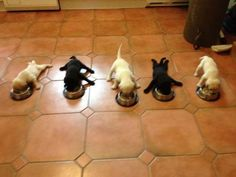 LOOK AT THEIR LITTLE LEGS THEY BARELY KNOW HOW TO STAND THEY'RE SO EXCITED FOR FOOD OHY GOD  awww