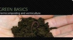 Vermicomposting and Vermiculture: Worms, Bins and How To Get Started