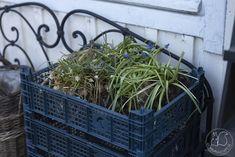 Oravankesäpesä: SIPULILAATIKOT. Terrarium, Plants, Home Decor, Homemade Home Decor, Terrariums, Flora, Plant, Decoration Home, Planting