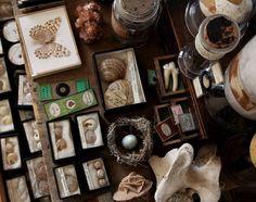 Teeth, shells, minerals