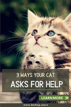 Your cat wants to tell you a lot of things, and as an owner, you need to understand and respond to his needs. Today, we decipher what their behaviors mean, and you can follow your cat better. We will give you an in-depth analysis of 3 ways your cat asks for help. Fun Facts About Cats, Cat Facts, Funny Talking, Ask For Help, Sleep, Learning, Studying, Teaching, Onderwijs