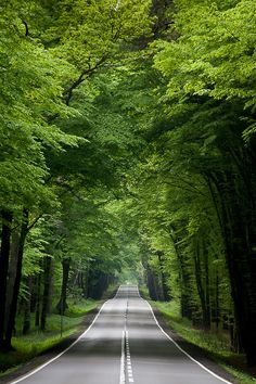 Travel Discover The road leads us to the forest. They forest is the main image Beautiful Roads Beautiful World Beautiful Places The Road Beautiful Nature Wallpaper Beautiful Landscapes Road Photography Landscape Photography Photography Poses Beautiful Roads, Beautiful World, Beautiful Places, Road Photography, Landscape Photography, Photography Poses, Photography Triangle, Famous Photography, Photography Lighting