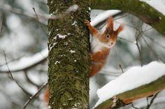 veverka Bird Feeders, Outdoor Decor, Animals, Animales, Animaux, Animais, Teacup Bird Feeders, Animal