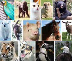 list of 25 smartest animals   http://www.google.com/url?sa=trct=jq=esrc=ssource=webcd=1cad=rjauact=8ved=0CB0QFjAAurl=http%3A%2F%2Flist25.com%2F25-most-intelligent-animals-on-earth%2Fei=mcq4U7T0PKGK8QGG9YDAAwusg=AFQjCNH61rGa1RREteV8mRSfBQNwulFwLQsig2=oQeUEAKvu53D4QAXan-SWQbvm=bv.70138588,d.b2U