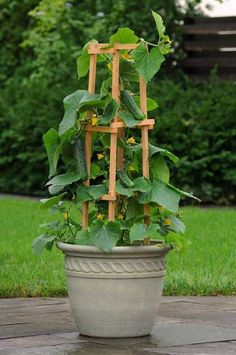 small garden Container gardening is an easy way to grow vegetables, especially when you lack yard space! If you have a small garden or simply a patio, balcony, or rooftop, explore the magical world of gardening in pots! Vegetable Garden For Beginners, Vegetable Garden Design, Diy Garden, Gardening For Beginners, Garden Pots, Gardening Tips, Garden Web, Garden Cottage, Small Vegetable Gardens