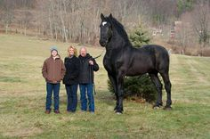 Now this is a horse. He stands 19 hands high and currently is the Percheron supreme world champion! — with Pallipuspa Sahoo, Tariq Anwar, Danielle Laverick and Andrew Stein.