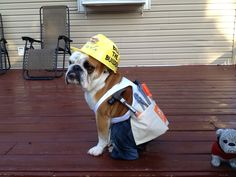 """Diy Halloween dog costume  - Toby dressed as """"Daddy"""""""