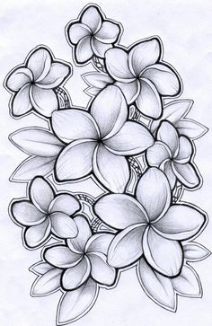 Black and grey plumeria drawing