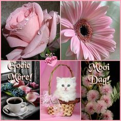 Good Morning Greetings, Good Morning Quotes, Beautiful Birthday Messages, Lekker Dag, Afrikaanse Quotes, Goeie Nag, Goeie More, Special Quotes, Beautiful Words