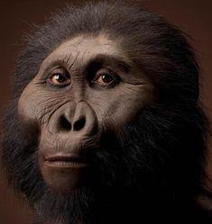 Por lo demás, el peso, estatura y aspecto general es muy parecido a los otros Australopithecus. Hallazgos de restos parciales del esqueleto postcraneal, como OH 80 de Olduvai, muestran unas características muy robustas, como unos brazos largos y fuertes con el radio y la ulna muy robustos.