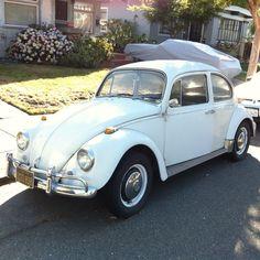 Alameda '67 Beetles