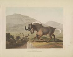[African scenery and animals] - Biodiversity Heritage Library