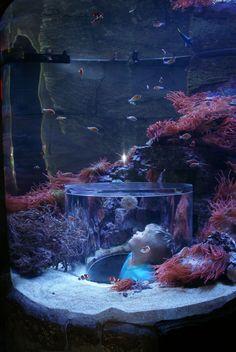 "While we are on Aquarium pics, here's my boy ""inside"" a tank (via #spinpicks)"