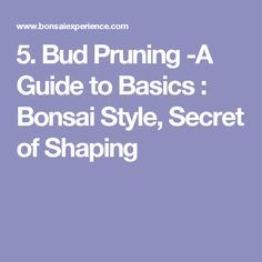 Trunk - A Guide to Bonsai Basics : Bonsai Style, Secret of Shaping Bonsai Styles, Miniature Trees, Trunks, Shapes, Bud, Floral, Plants, Decor, Drift Wood