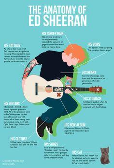 Sheeran-USA : Photo
