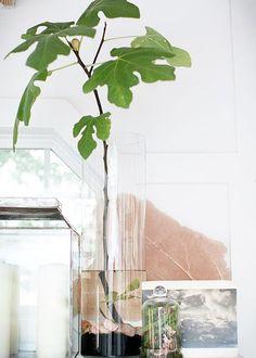 """Des plantes décoratives aux vertus """"bien être"""""""