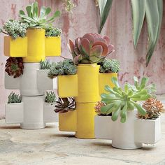 Designed for stacking, these planters can be layered to add height and drama to your garden display and they're perfect for succulents.