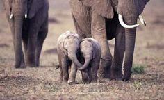 Let's hold trunks...