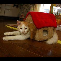 おかき、入っちゃった!Okaki in the House. #cats #neko #okaki  - @kachimo   Webstagram