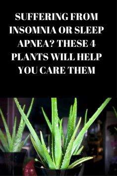 Suffering From Insomnia Or Sleep Apnea? These 4 Plants Will Help You Care Them