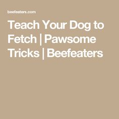 Teach Your Dog to Fetch | Pawsome Tricks | Beefeaters