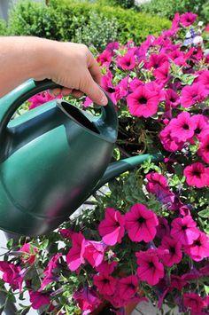 Mehr Blütenpracht Für Topfrosen | Garten Pflanzen Fur Steingarten Tipps Auswahl Pflege