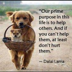 """Our prime purpose in this life is to help others. And if you can't help them, at least don't hurt them."" ~Dalai Lama"